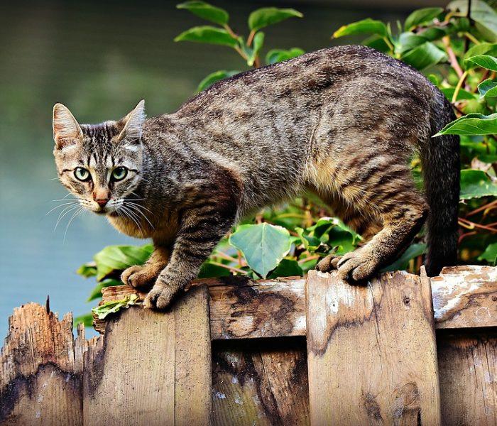 Pouštět kočku ven – ano či ne?