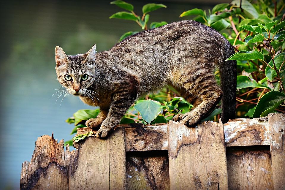 cat-3846780_960_720